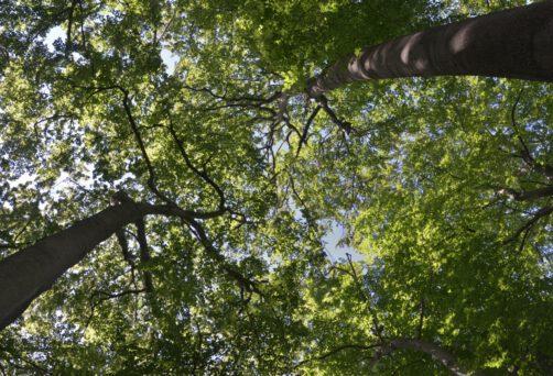 Ab 12. September – Yoga im Wald Workshop